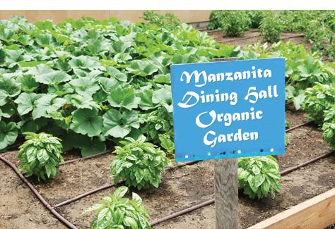 Manzanita Dining's organic garden