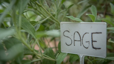Sage Plant and Garden Marker
