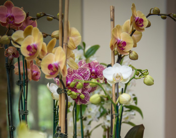 The Munger Market offers gifts like fresh orchids