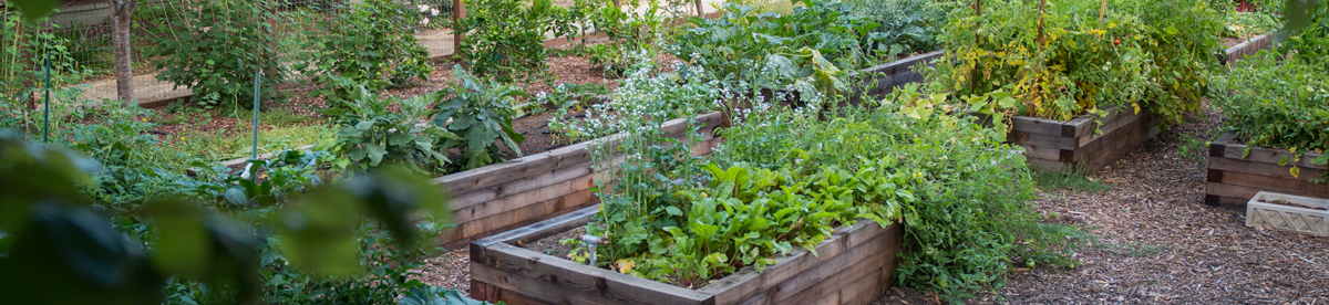 BeWell sustainable garden